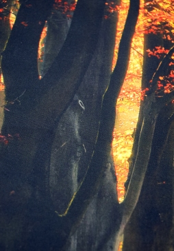 _Artworks Fall Trees_branch close up