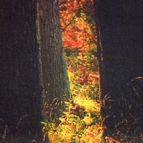 _Artworks Fall Trees_grass close up